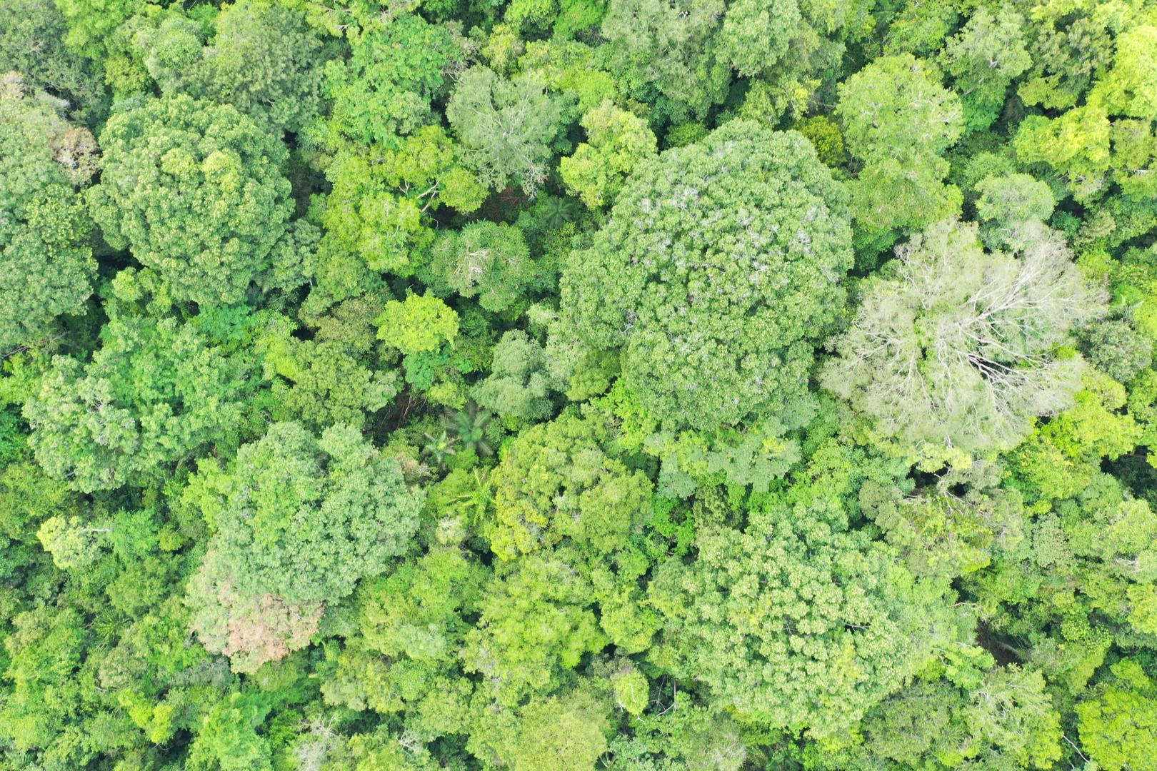 Aerial imagery of forest canopy